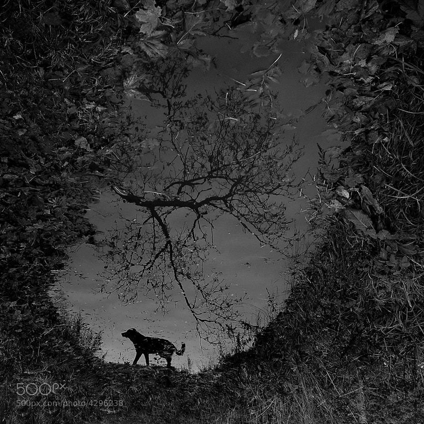 Photograph shadow wolf by Sebastian Luczywo on 500px