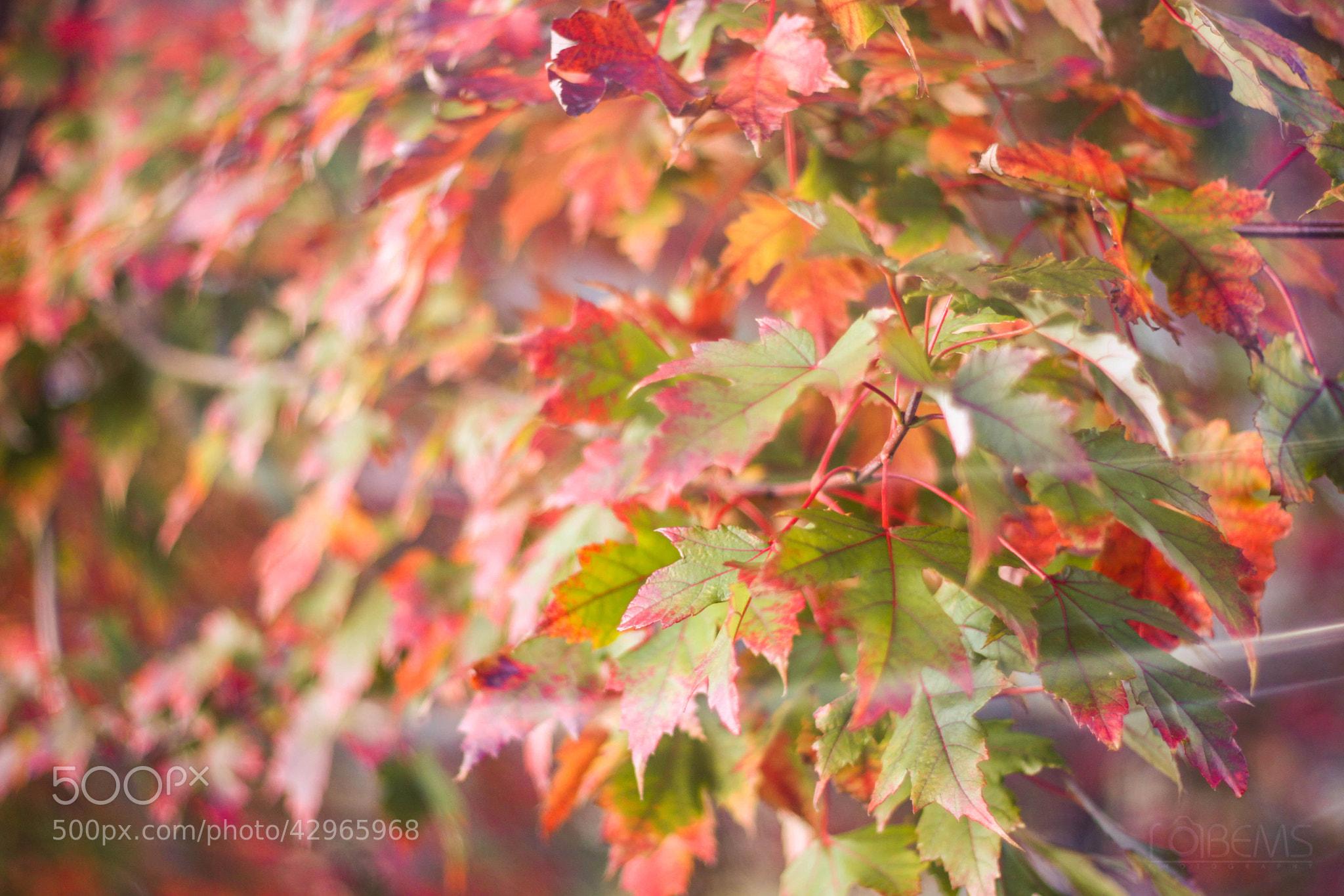 Photograph Dando paso al otoño by BEATRIZ MONTIEL on 500px