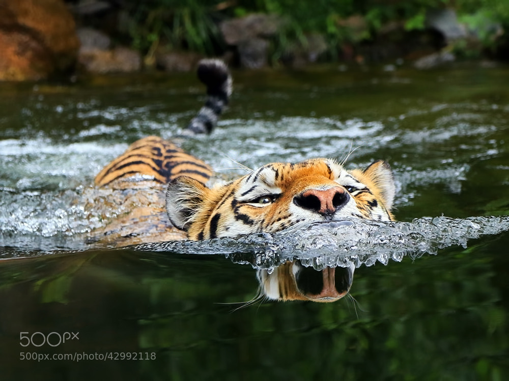 Photograph Funny reflection by Klaus Wiese on 500px