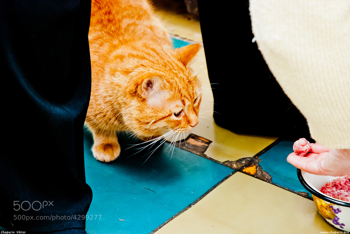 Photograph Red Cat & Meat | Рыжик и фарш by Viktor Chapurin on 500px