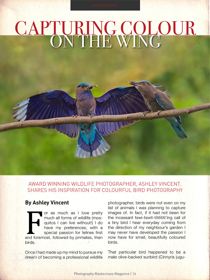 As some of you may recall, two of my images were featured in Photography Masterclass Magazine a little while ago. For those of you with an iPad, in this months edition you can read an article I put together for the magazine in which I share some photos, personal experiences of, and tips on capturing small colourful birds in flight … or at least with their wings outstretched ;)