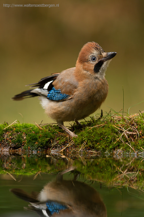Photograph Jay fun by Walter Soestbergen on 500px