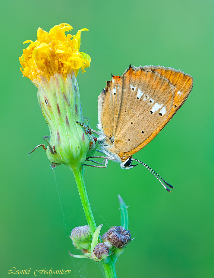 Photograph A Torch For Butterfly by Leonid Fedyantsev on 500px
