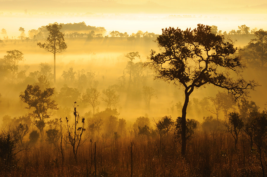 Photograph After Sunrise by Kawin Samer on 500px