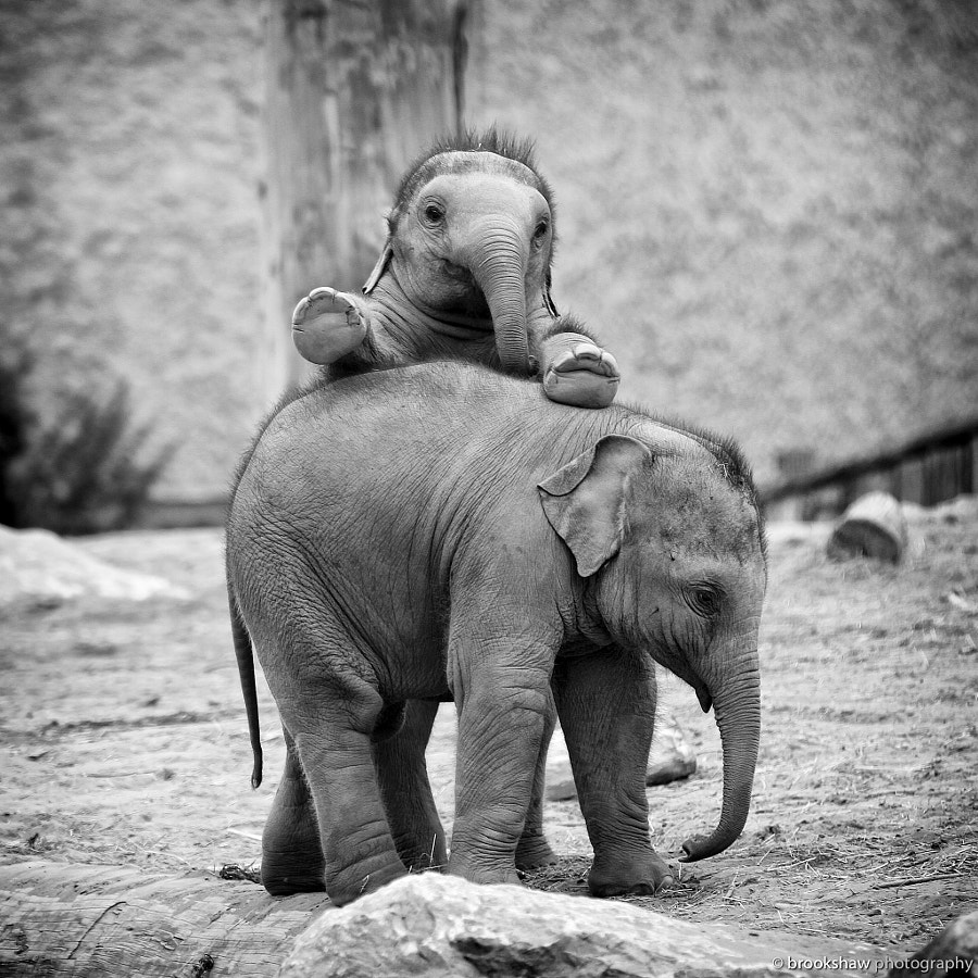 Elephant Fun! by Gary Brookshaw on 500px.com