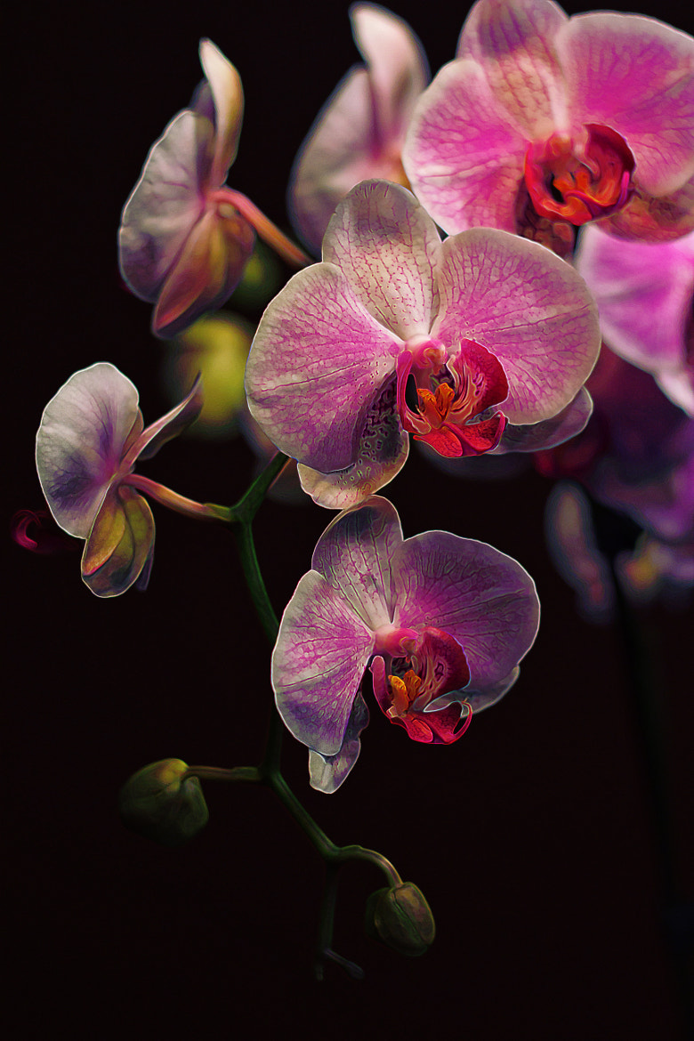 Photograph Orchidaceae Gravitas by Bill Tiepelman on 500px