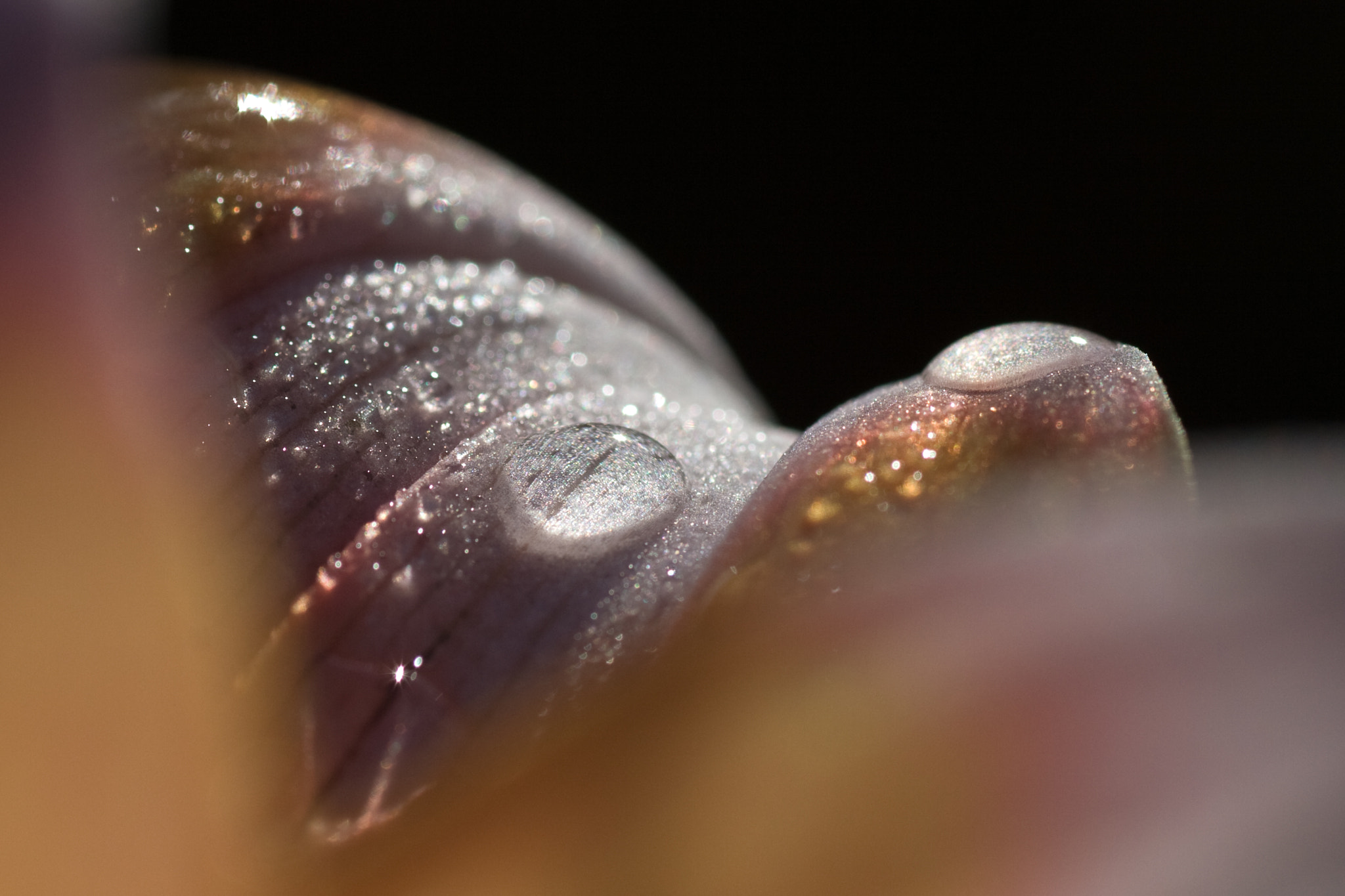 Photograph Droplets by Jonathan Clark on 500px