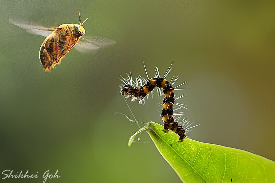 Photograph Courage by shikhei goh on 500px