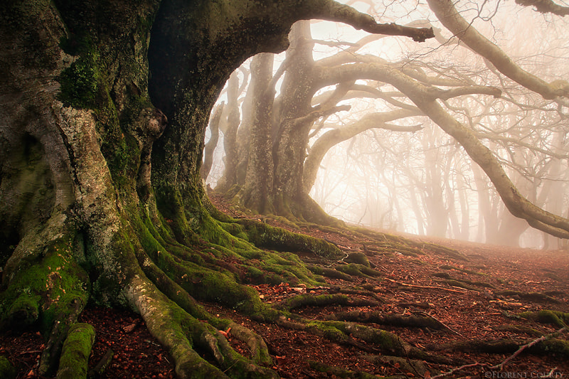 Photograph Mystery Keepers by Florent Courty on 500px