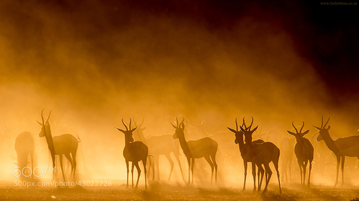 Photograph Kgalagadi Silhouette by Lee Bothma on 500px