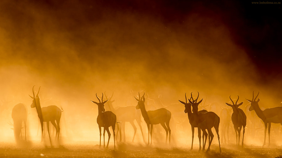 Kgalagadi Silhouette by Lee Bothma on 500px.com