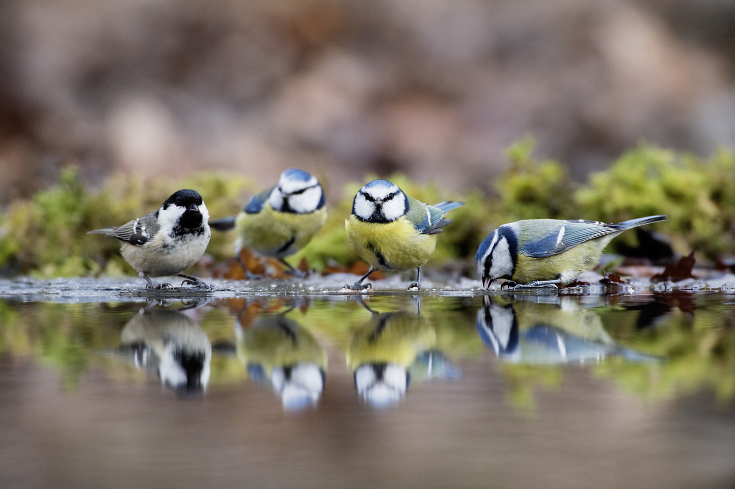 Photograph Taking a drink by Craig Churchill on 500px
