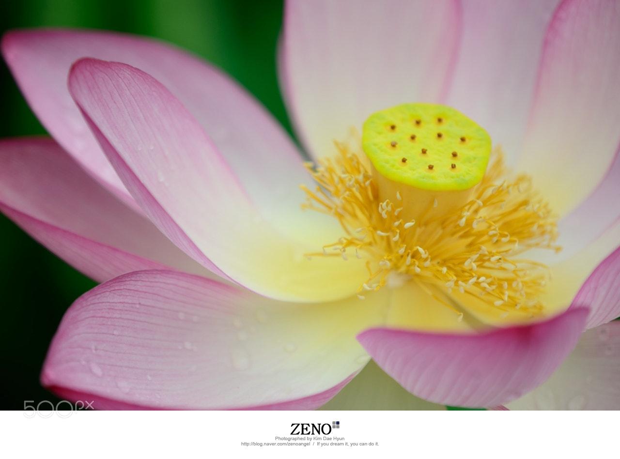 Photograph Lotus-연꽃 by Kim DaeHyun on 500px