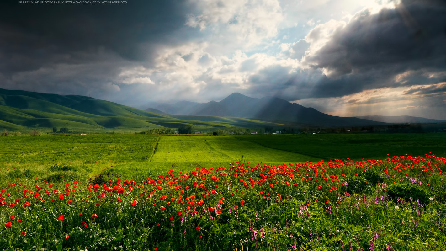 Photograph In Memory of Last Spring by Lazy Vlad on 500px