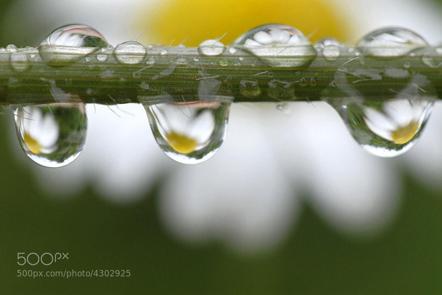 Photograph Rain Drop 1 by Turan Sezer on 500px