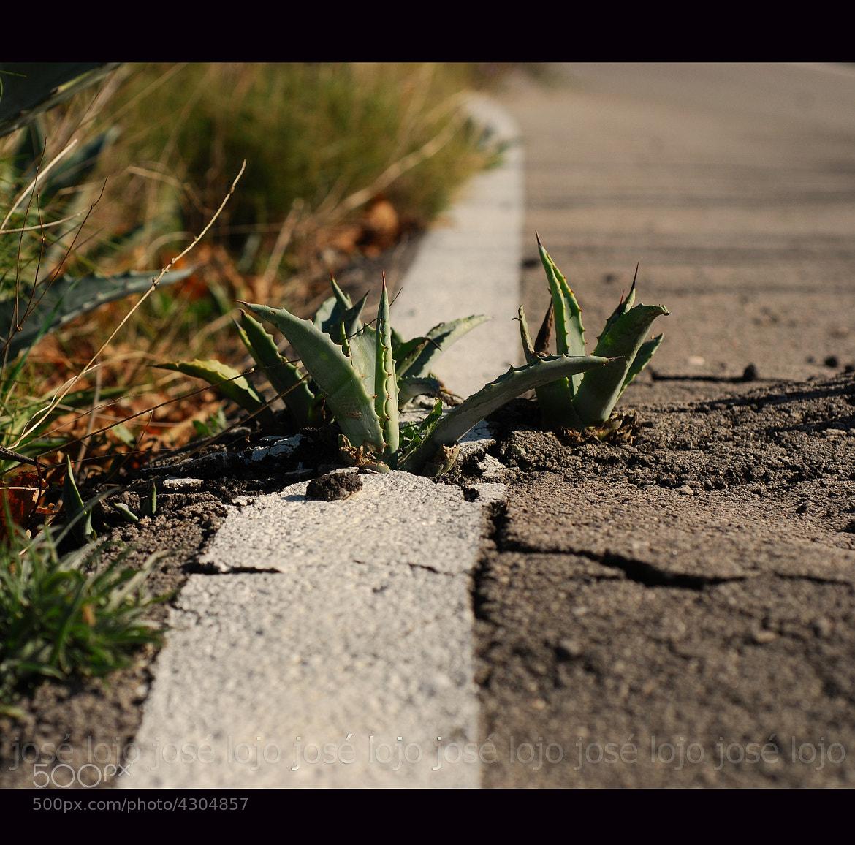 Photograph al borde del camino by Jose Lojo on 500px