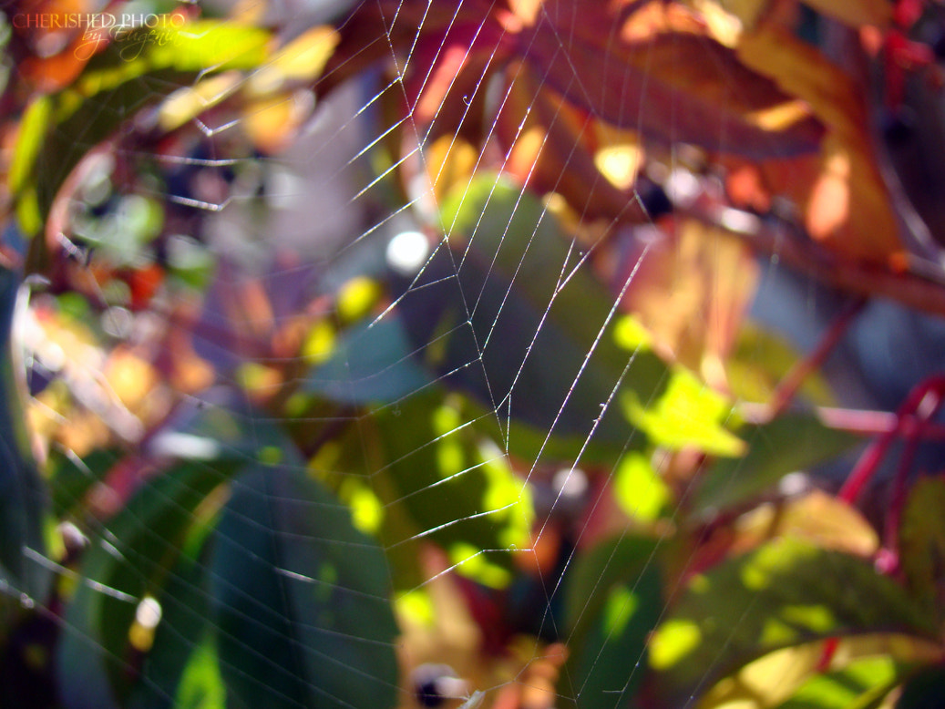 Photograph Sun in web by Jane Cherished on 500px