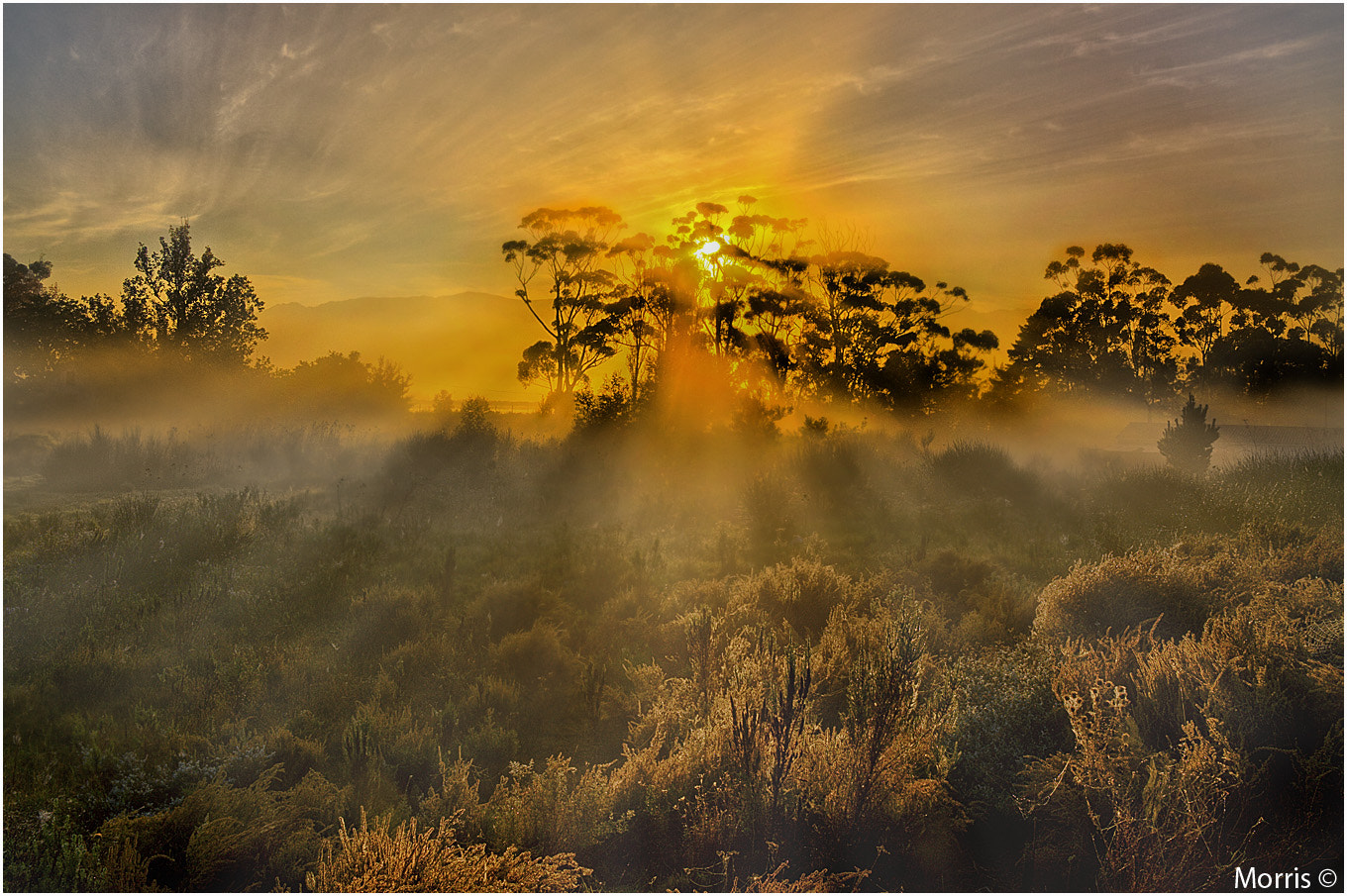 Photograph Misty Mornings in the Cape by Dave Morris on 500px