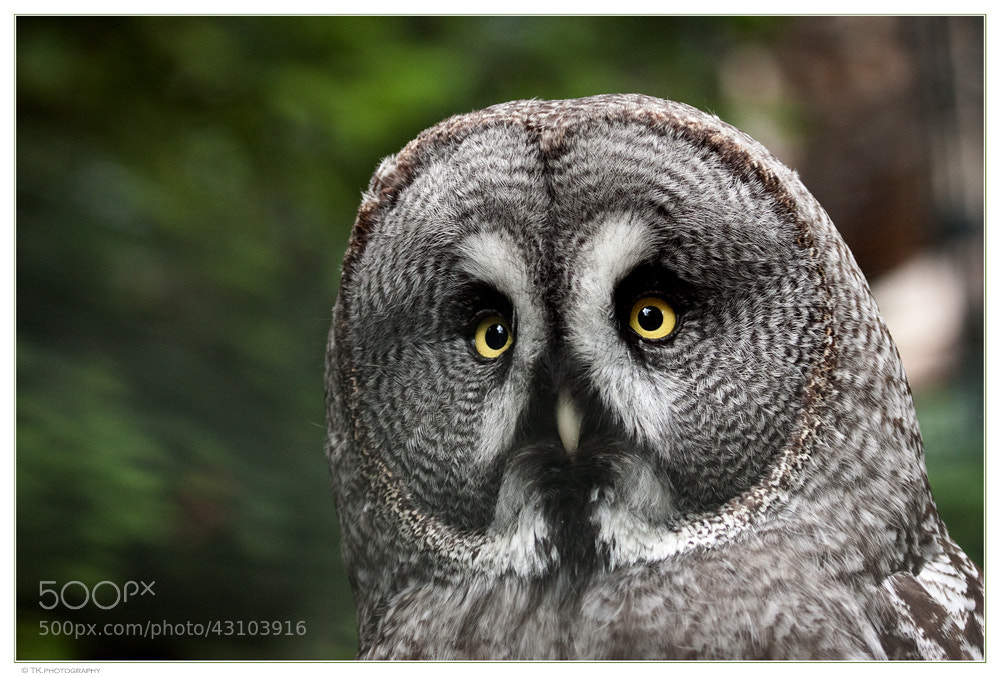 Photograph Bright Eyes by Tobi K on 500px