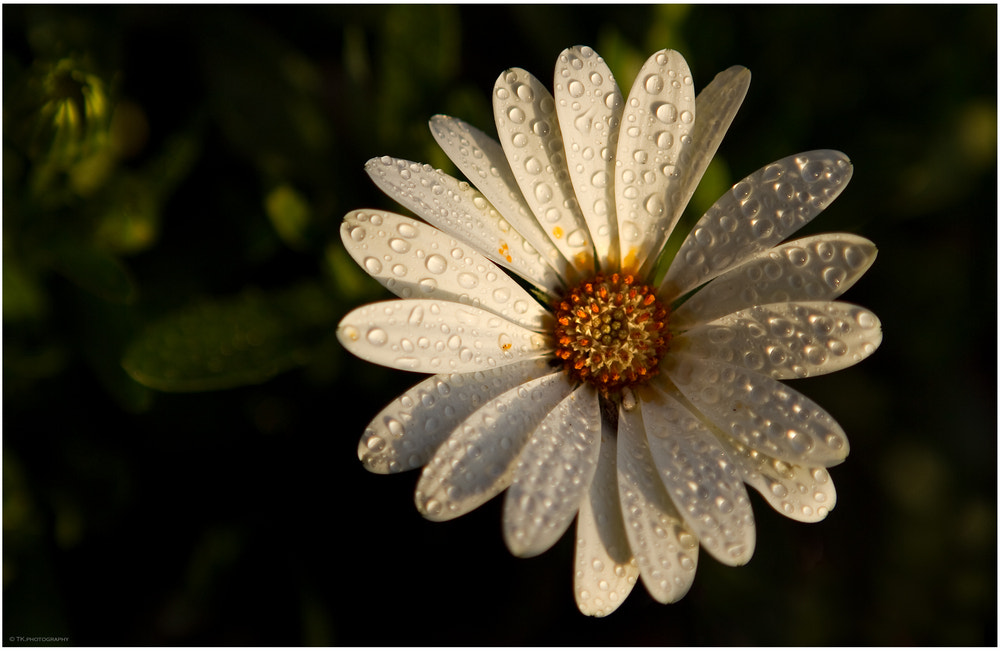 Photograph Last Drops.... by Tobi K on 500px