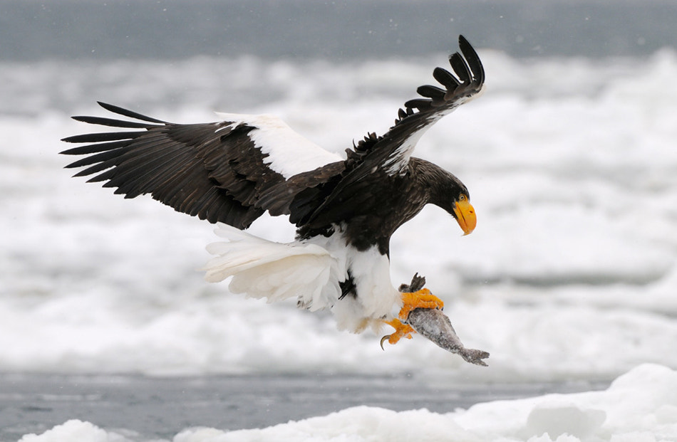 Photograph Deeply Frozen by Harry  Eggens on 500px