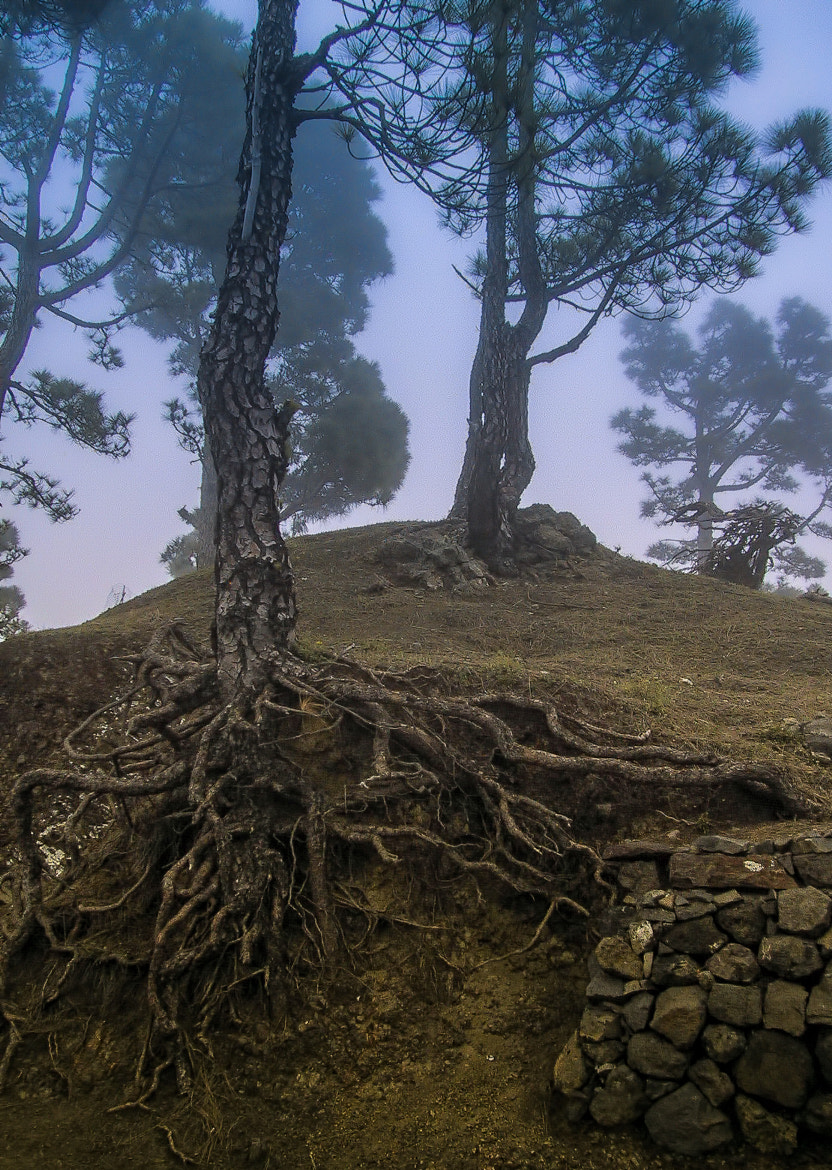 Photograph Roots by JKGR  on 500px