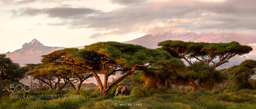 Photograph Dreaming of AFRICA by Marina Cano on 500px