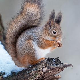 Taste of a nut by Sergey Golotvin on 500px.com