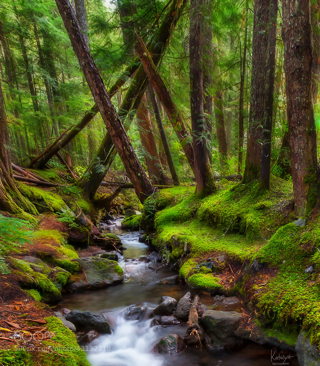 Photograph Forest Creek by Salty Cat on 500px