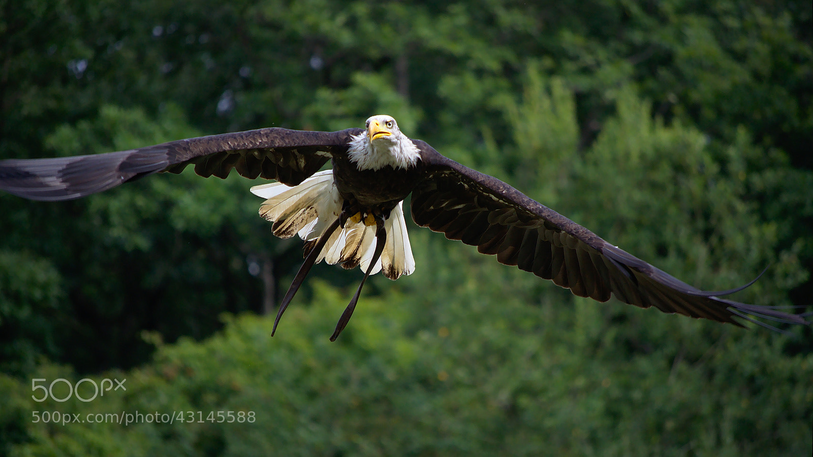 Photograph Eagle on the loose by Didier B on 500px