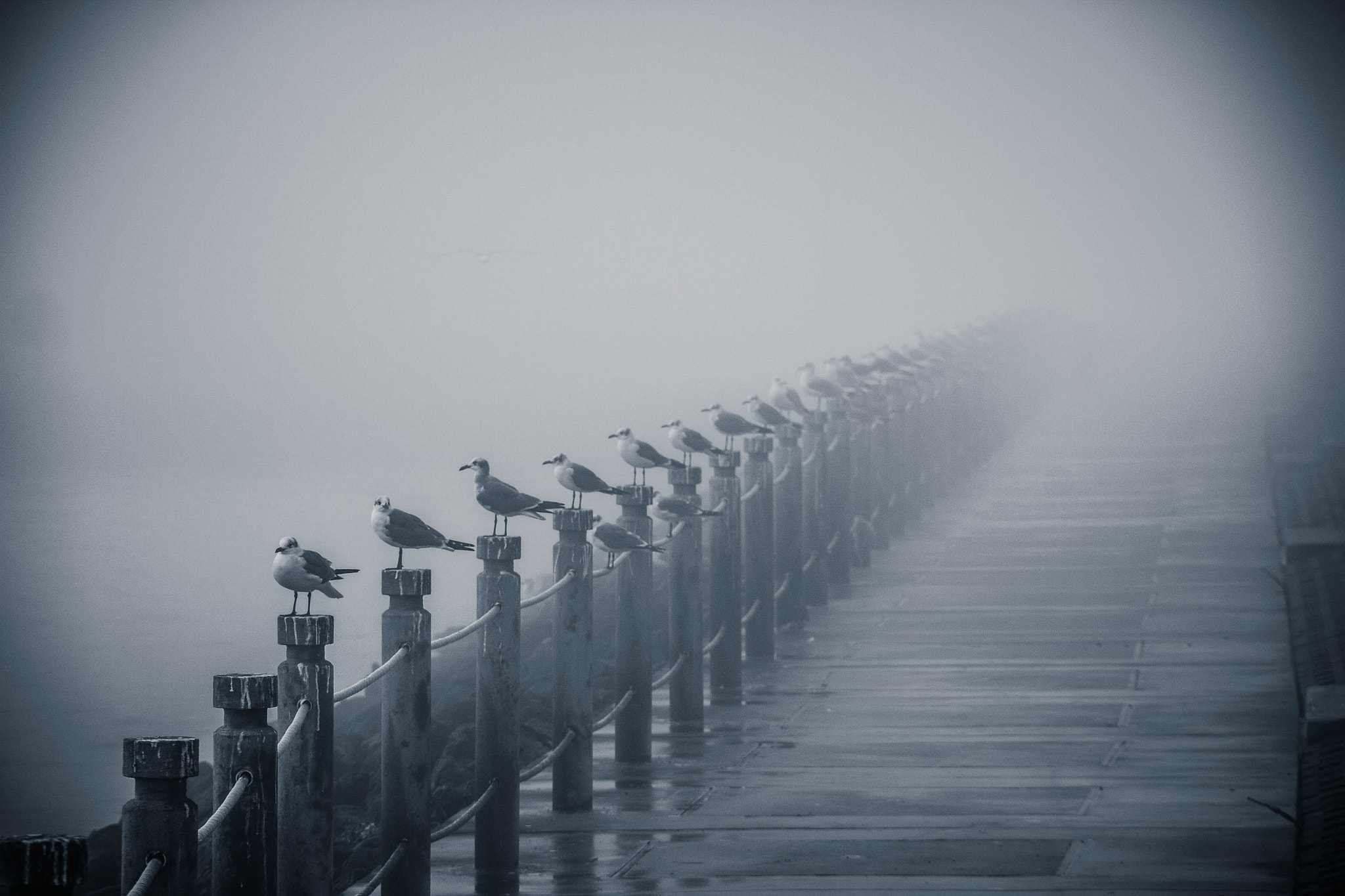 Photograph Birds in the fog by Bubba  on 500px