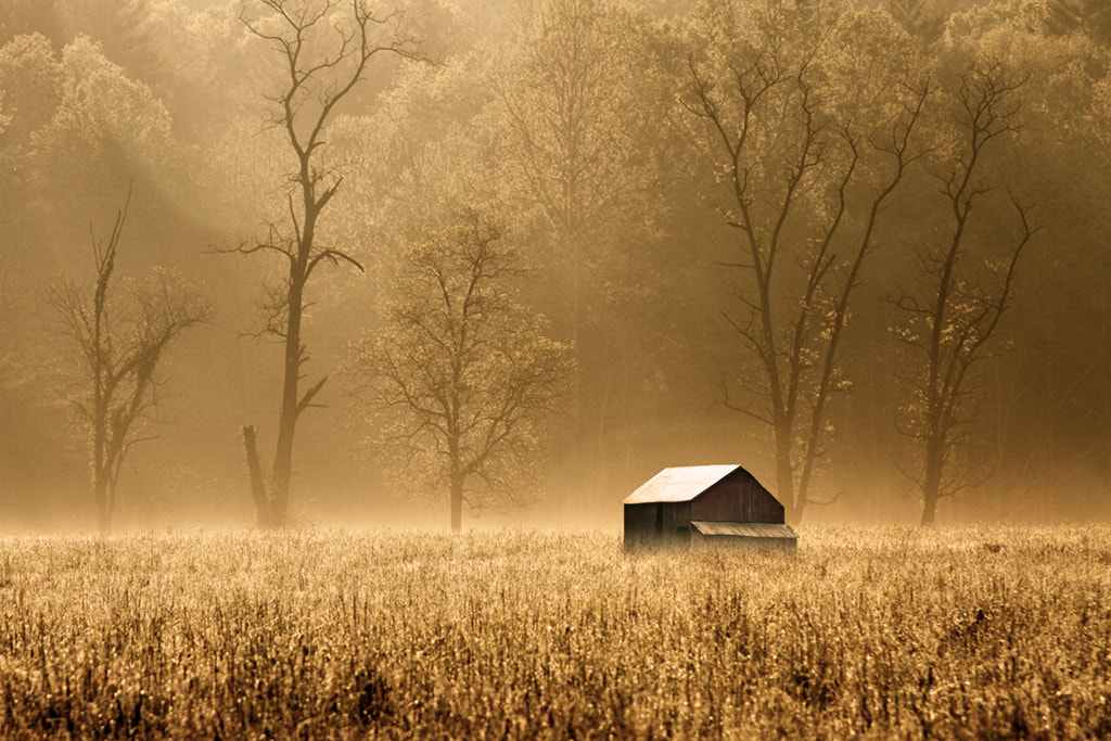 Photograph Foggy Morning by Aaron Shaver on 500px