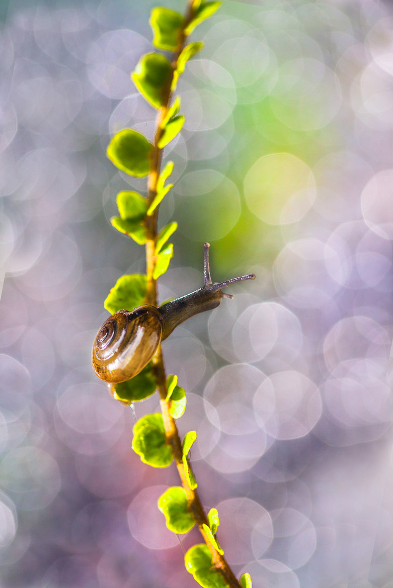 Photograph Colourful Life  by Benjamin Pelawi on 500px