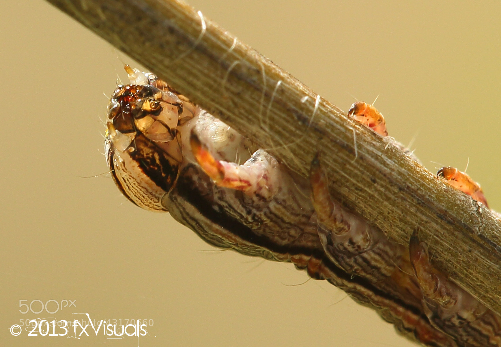 Photograph Caterpillar by Dilip Singh on 500px
