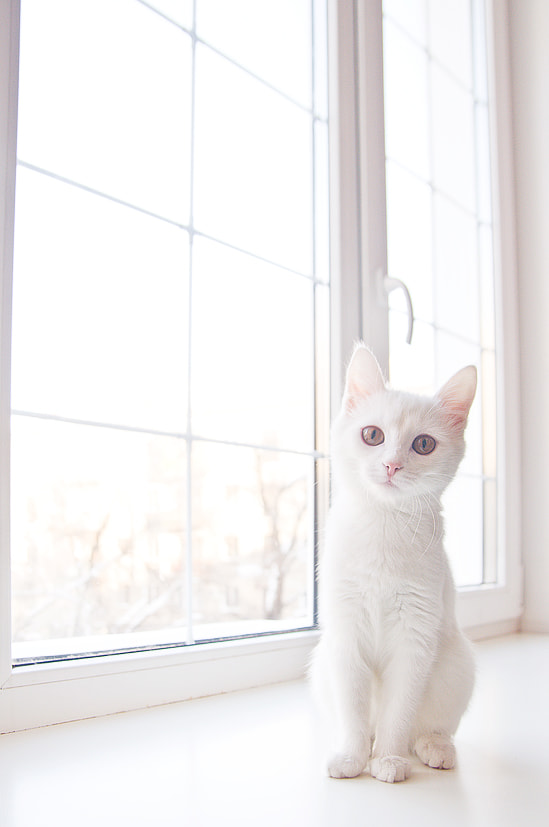 Photograph whiteness by Daria Prokofeva on 500px