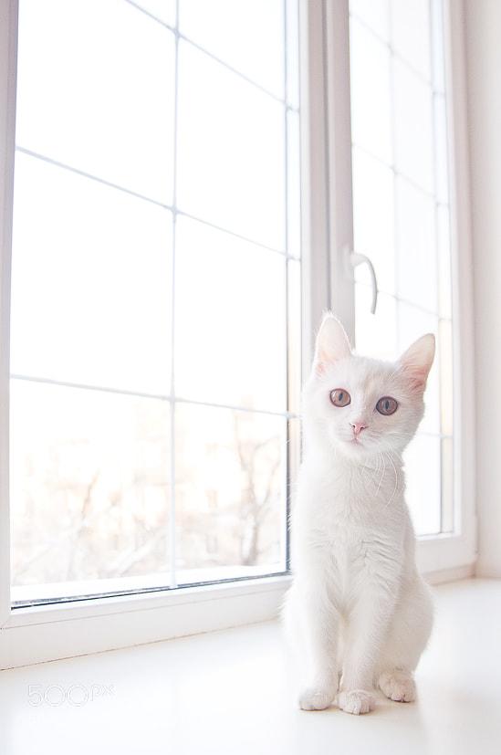 Whiteness by Daria Prokofyeva