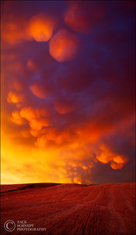 Photograph Mammatus Eruption by Zack Schnepf on 500px