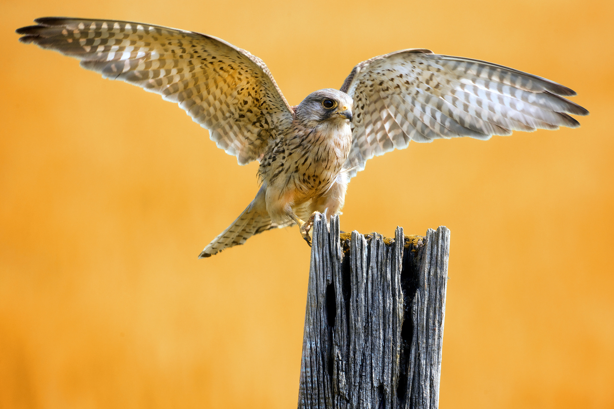 Photograph yellow kes by Mark Bridger on 500px