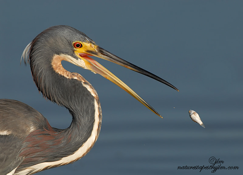 Photograph Almost !! by Judylynn Malloch on 500px