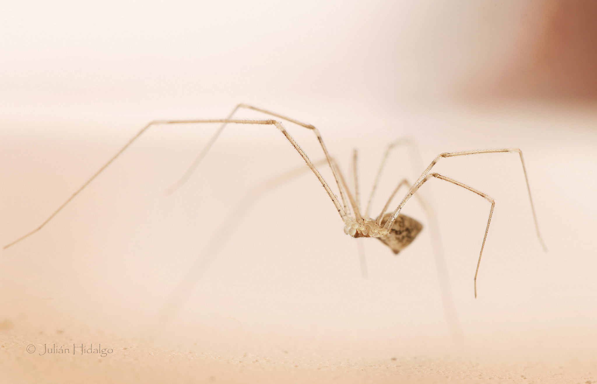 Photograph Long legs monster by Julián Madrid on 500px