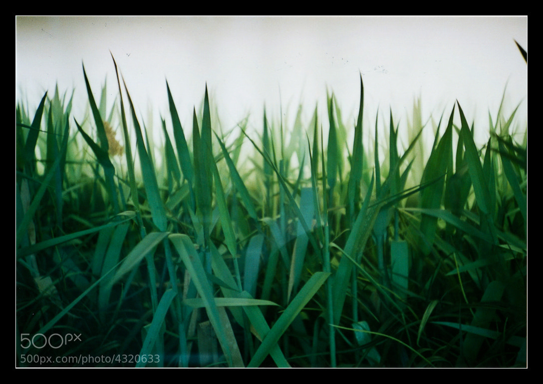 Photograph grass by Holger Feroudj on 500px
