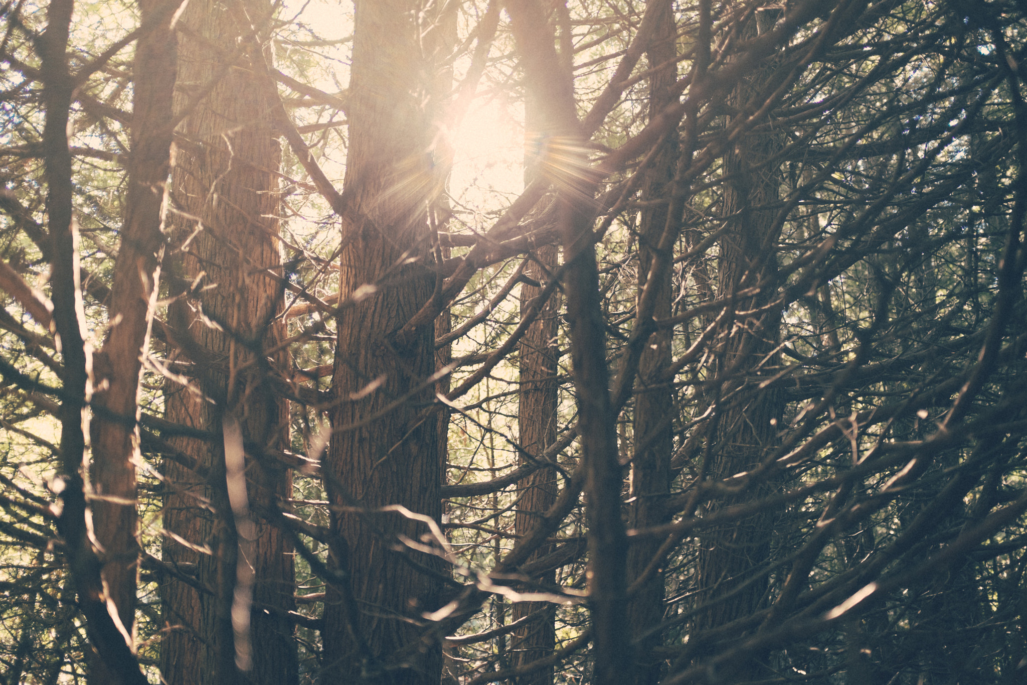 Photograph Morning in the Forest *1202 by Mark Shannon on 500px