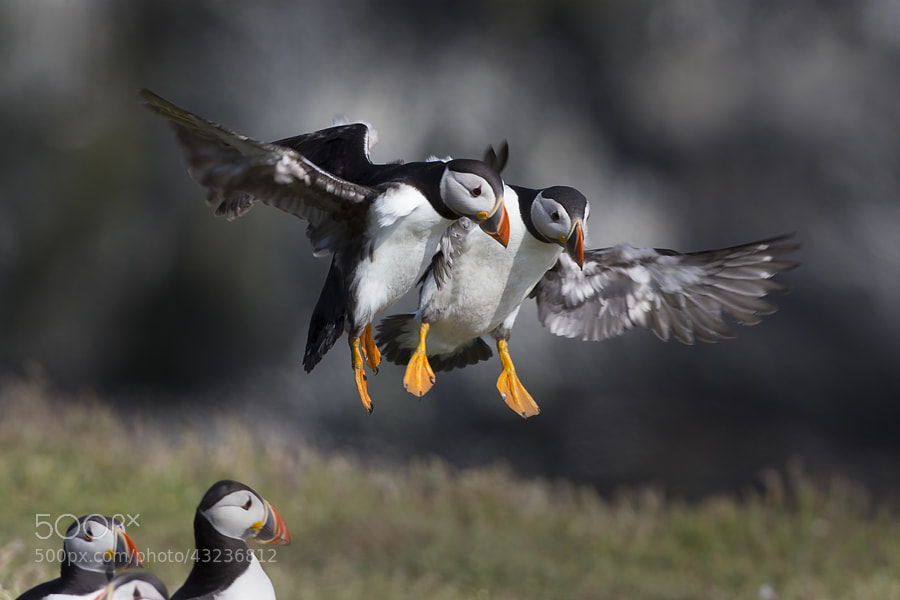 Photograph Mid Air Collision by Ian Schofield on 500px