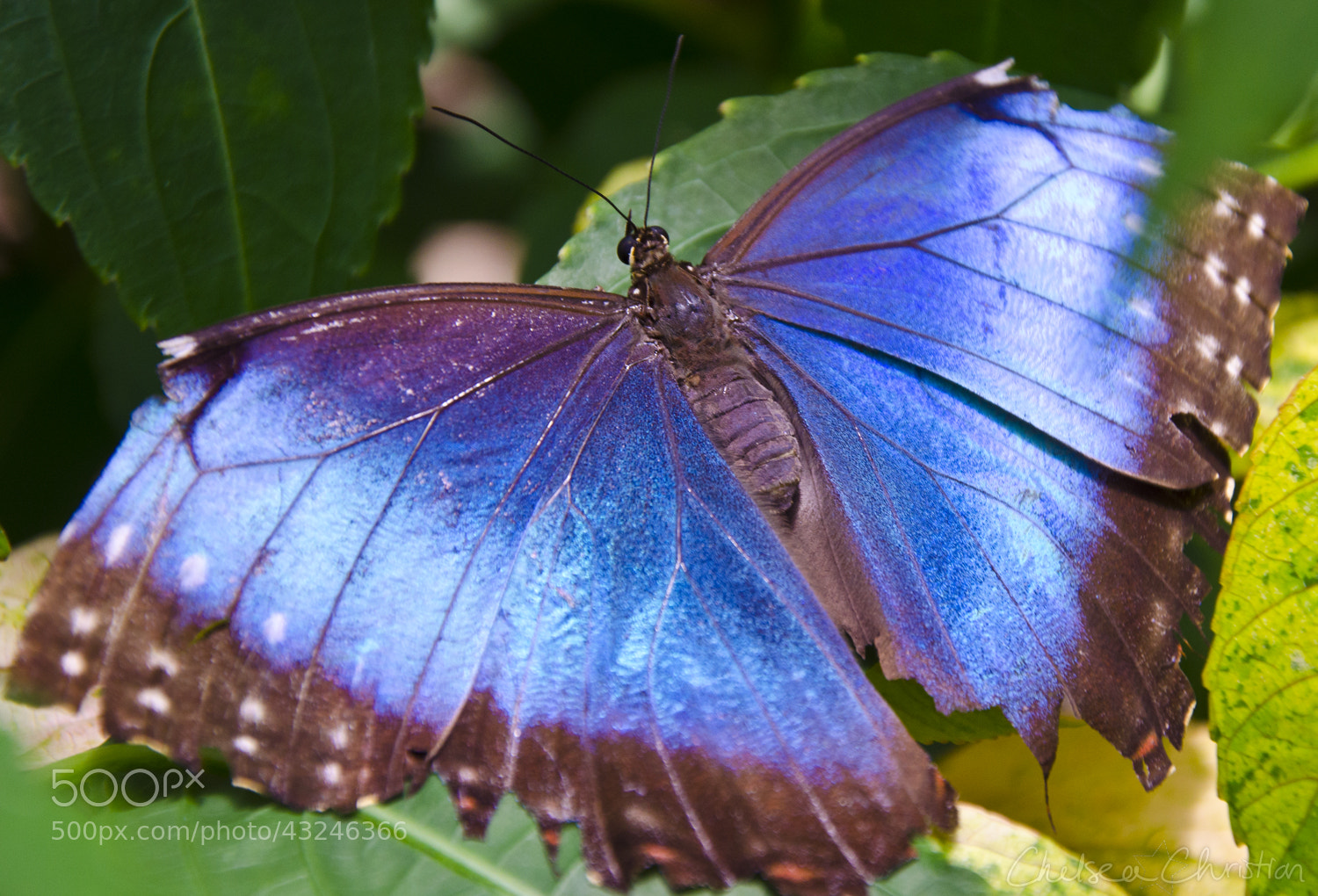 Photograph Butterfly Rainforest by Chelsea Christian on 500px