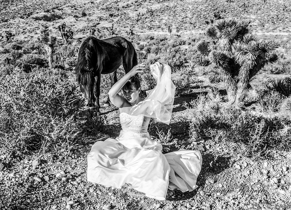 Photograph The Bride's Mare by Edie G. on 500px