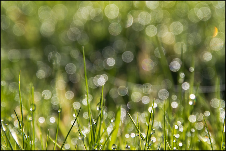 Photograph Fresh grassy morning by Inés Montenegro on 500px