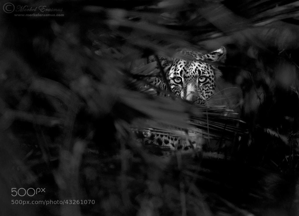 Photograph Wild Eyes by Morkel Erasmus on 500px