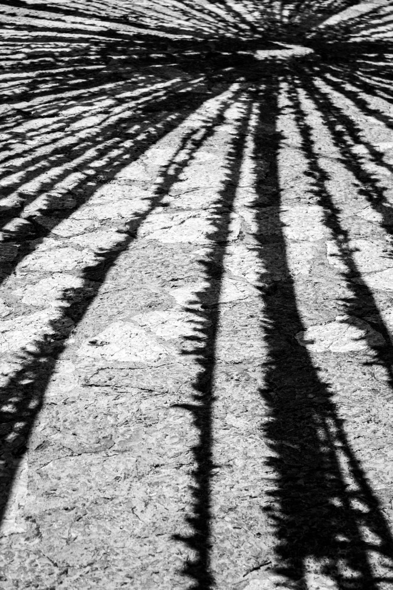 Photograph Shadows by Michael Writer on 500px
