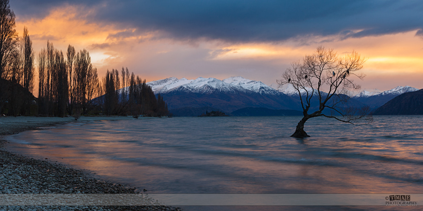 Photograph The Wanaka Tree by Tim McGuire on 500px