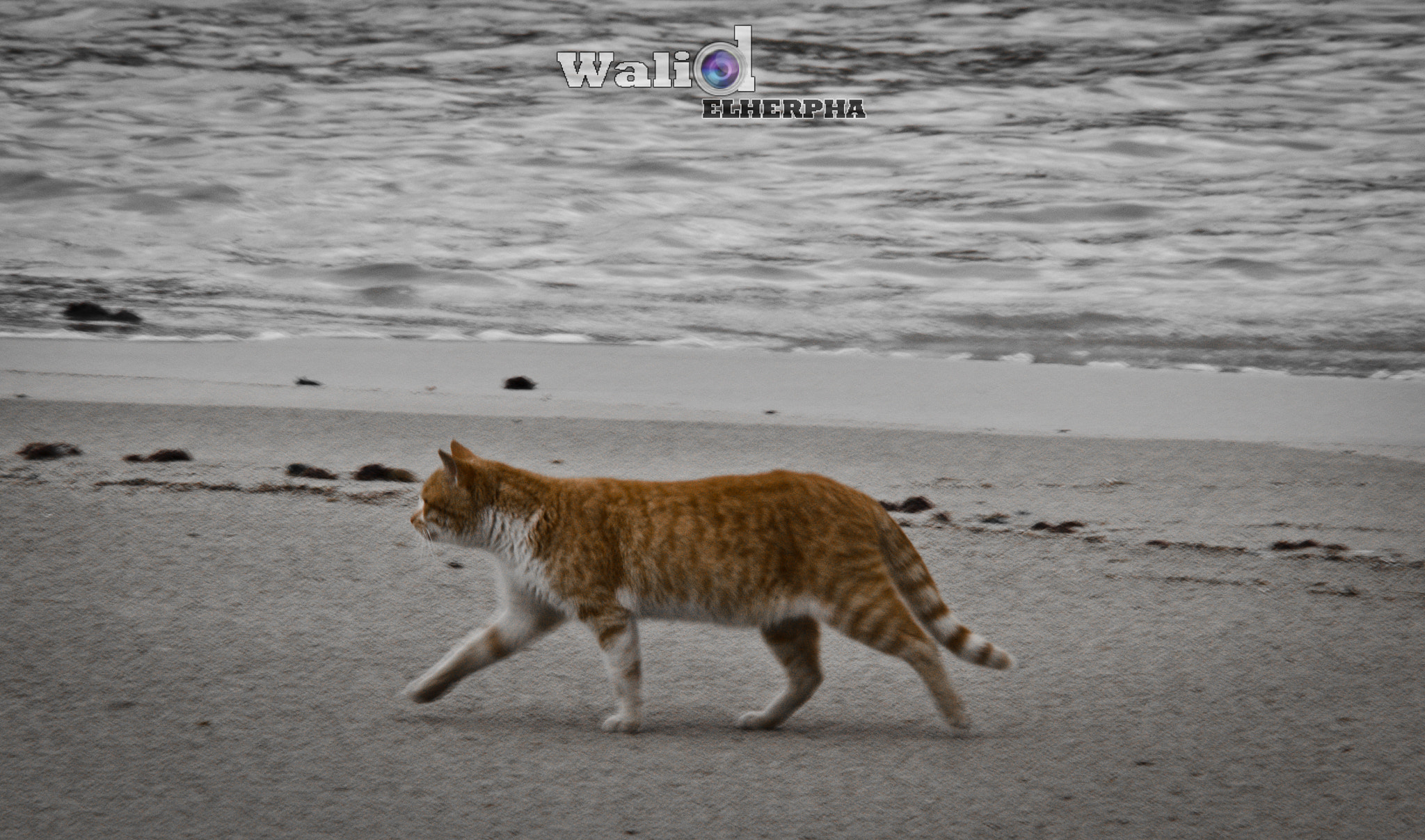 Photograph Alone on the Shore ! by Walid EL Herpha on 500px